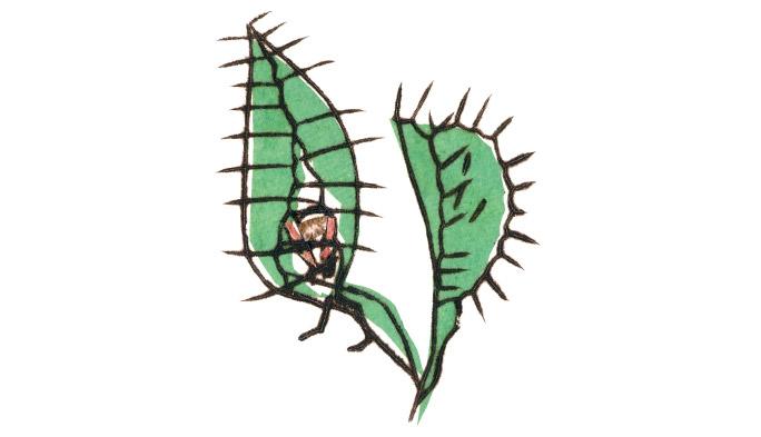 空振りをするまいと、食虫植物は記憶する