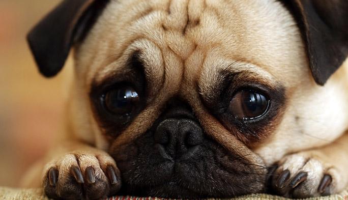 災害時、ペットをどう守る? 最新の迷子防止&ペット見守りサービス