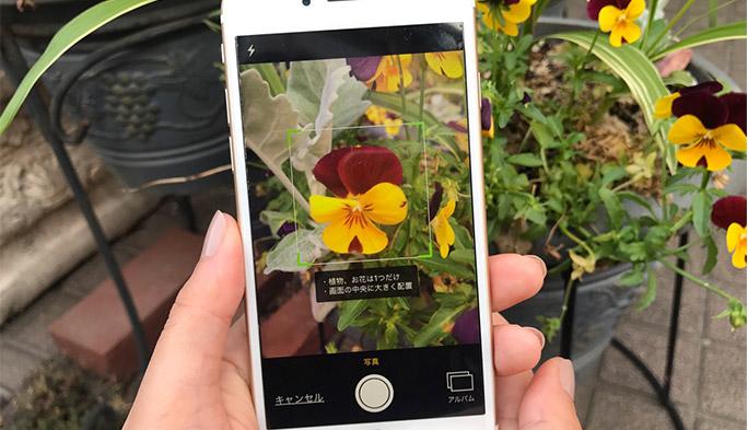植物好きによる植物好きのための植物系SNS「GreenSnap」を使ったら、外を歩くのが楽しくなりました