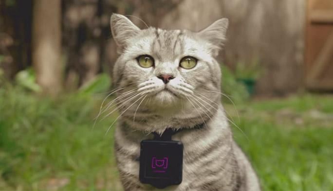 ネコがインスタグラムを投稿!? ニャンスタグラムでのぞくネコの秘密
