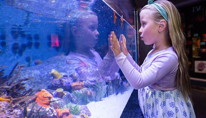 不在時も安心? 熱帯魚などの海洋生物には水槽の監視システムを