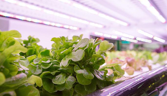 農業のICT化が人類を飢餓から救う! 『スマートアグリ』とは