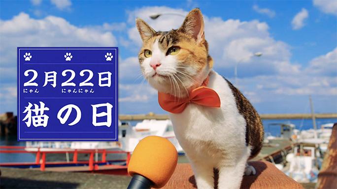 猫の日」に「猫の島」で猫100匹...